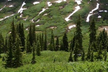 High Country Pines || Gunnison National Forest, CO