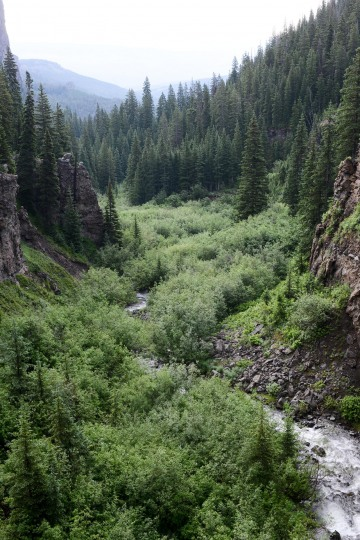 Mill Creek Canyon || West Elk Wilderness, CO