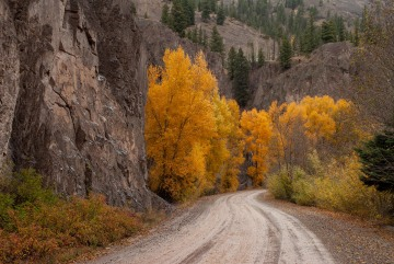 Mountain Road in Fall || Colorado
