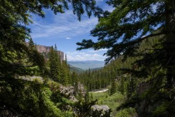 Pine Framed West Elk Wilderness || Colorado