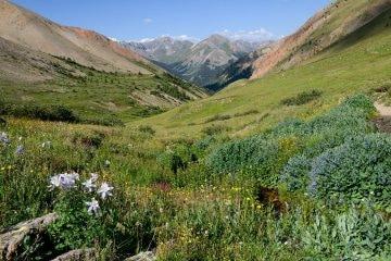Silver Creek || Red Cloud Wilderness, CO
