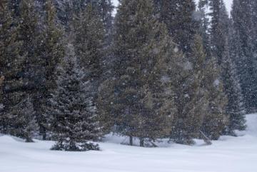 Snow over Pearl Lake || Pearl Lake State Park