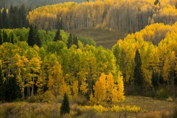 Valley of Aspens in Fall || Crested Butte, CO