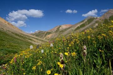 Wildflowers along Silver Creek || Colorado