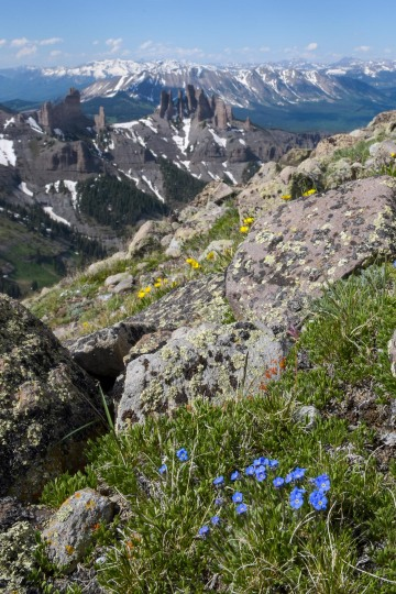 Wildflowers at Storm Pass || Gunnison National Forest, CO