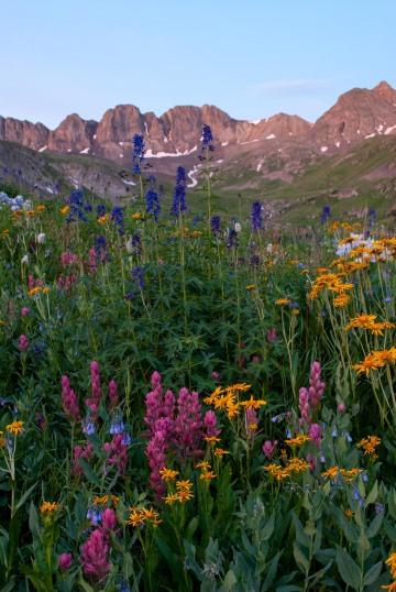 Wildflowers of American Basin    Colorado