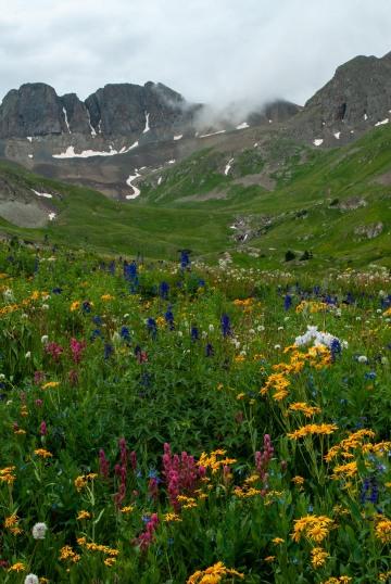 Wildflowers of American Basin || Colorado