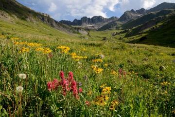 Wildflowers of San Juan   American Basin, CO