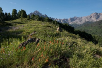 Wildflowers of Sneffels Wilderness || Colorado