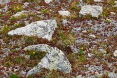 Alpine Tundra || Mt. Harvard, CO