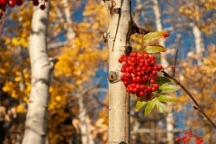 Autumn Day in the Mountains || Colorado