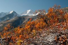 Autumn in the Elk Mountains || Colorado