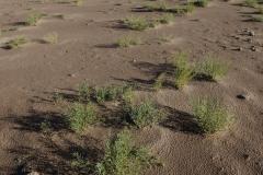 Dunes & Grass || Great Sand Dunes NP, CO