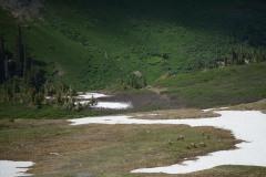 Elk Herd in Valley    West Elk Wilderness, CO