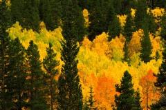 Fall Color || Colorado