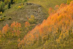 Fall Colors of Red Lady Basin || Crested Butte, CO
