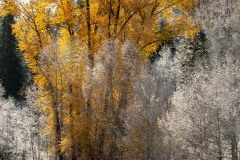 Fall Frost || Colorado