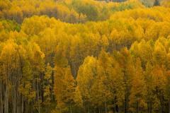 Golden Hues of Aspen || Crested Butte, CO