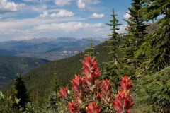Indian Paintbrush || Mt of the Holy Cross, CO