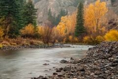 Lake Fork of the Gunnison in Fall || Colorado