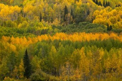 Streak of Fall Color || Crested Butte, CO