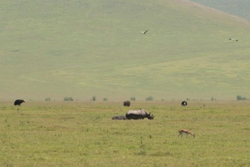 Abundant African Wildlife || Ngorongoro Crater, Tanzania