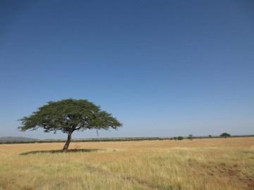 Dry Serengeti || Serengeti National Park, Tanzania