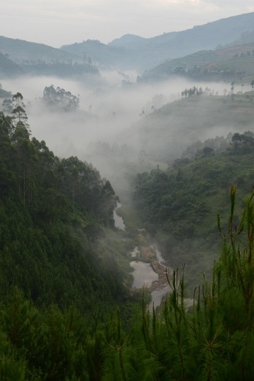 Fog in the Virunga Mountains || Uganda