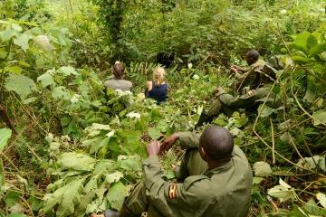 Gorilla Trekking || Bwindi Impenetrable National Park, Uganda