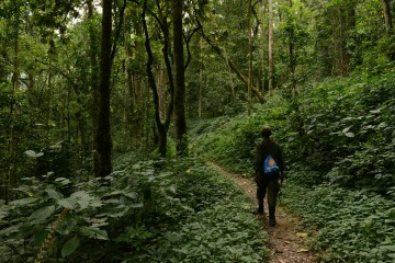 Hiking Bwindi Impenetrable National Park || Uganda
