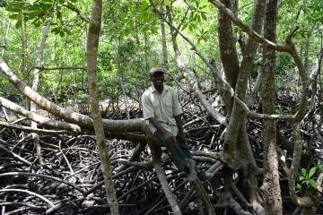 Mangrove Forest || Jozani Chwaka Bay National Park, Zanzibar