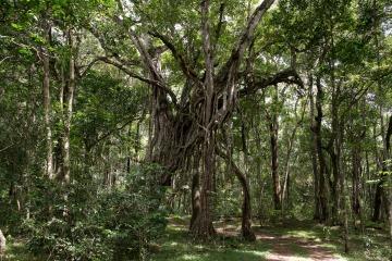 Ngurdoto Forest || Arusha National Park, Tanzania