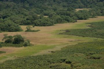 The Lush Ngurdoto Crater || Arusha National Park, Tanzania
