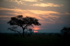 Acacia Sunset || Serengeti National Park, Tanzania