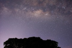 African Stars || Ngorongoro Crater, Tanzania