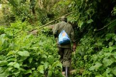 Hiking Bwindi Impenetrable National Park || Uganda