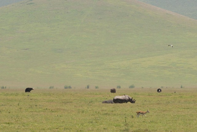 Black Rhinoceros Crested Crane Ostrich and gazelle
