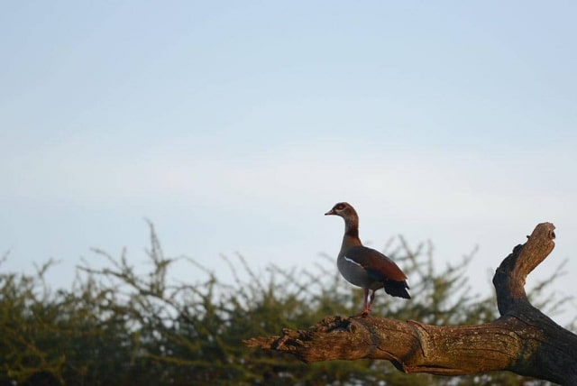 Unidentified Bird in East Africa