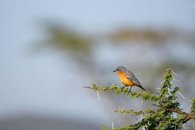 Unidentified East African Bird