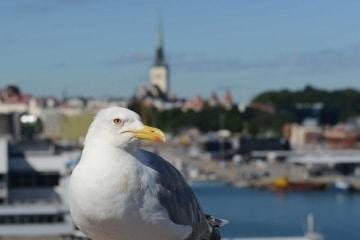 Port of Tallinn || Estonia
