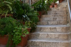 Steps of Hvar || Croatia