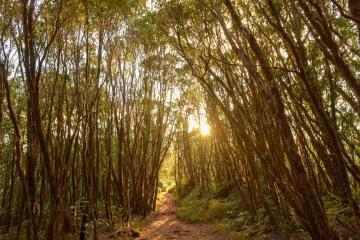 Pihea Trail || Kauai, Hawaii
