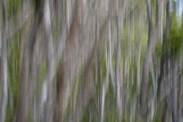 Silver Abstract || Kōke'e State Park