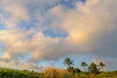 Kīpahulu Campground || Maui