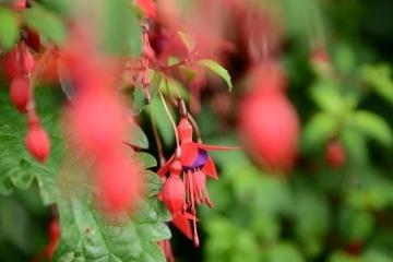Flora of Howth || Ireland