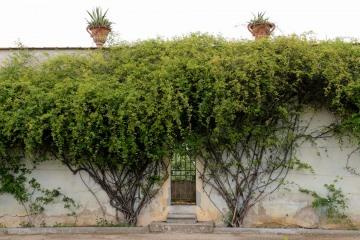 Boboli Gardens || Florence