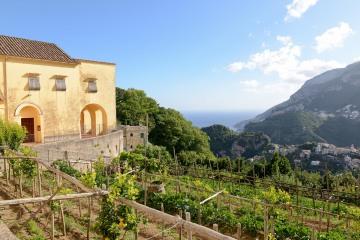 Vineyard in Ravello || Amalfi Coast