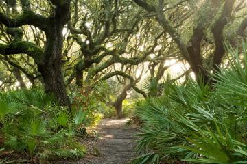 Palms and Live Oaks || Cumberland Island, GA