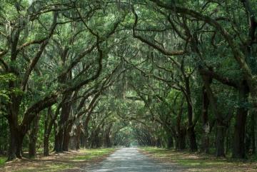 Wormsloe Plantation || Savannah