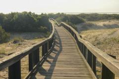 Cumberland Island Boardwalk    GA